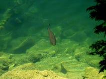 Poissons dans le lac Photographie stock
