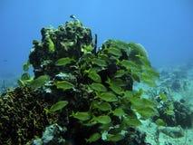 Poissons dans le récif image libre de droits