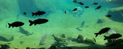 Poissons dans un aquarium Images libres de droits
