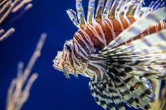 Poissons dans un aquarium image libre de droits