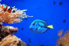 Poissons dans un aquarium Photographie stock libre de droits
