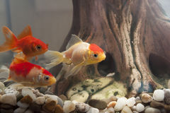 Poissons dans un aquarium Photos stock