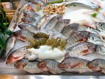 Poissons de Bolty superbes, poissons de butin et crevette Photographie stock libre de droits