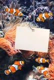 Poissons de clown et feuille vide d'un papier sur un hameçon Photo stock