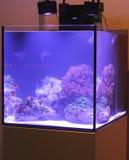Poissons de clown et x28 ; lat Amphiprioninae& x29 ; dans l'aquarium marin Photos libres de droits