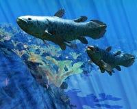 Poissons de Coelacanth Photo libre de droits