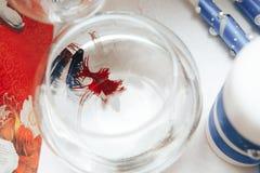 Poissons de combat dans l'aquarium photographie stock libre de droits