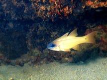Poissons de corail Photographie stock libre de droits