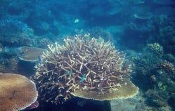 Poissons de corail en photo sous-marine de bord de la mer tropical Animal de récif coralien Photos stock