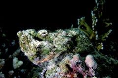 poissons de corail tropicaux photo libre de droits