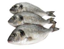 poissons de dorade Photographie stock libre de droits