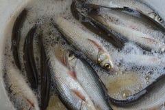 Poissons de poissons en écologie de crochet de seau photo libre de droits