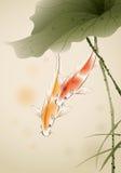 Poissons de Koi dans l'étang de lotus Photo libre de droits