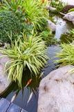 Poissons de Koi dans le jardin d'étang Images stock