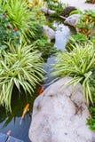 Poissons de Koi dans le jardin d'étang Image libre de droits