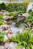 Poissons de Koi dans le jardin d'étang Photographie stock libre de droits