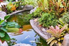 Poissons de Koi dans le jardin d'étang Image stock