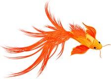 Poissons de koi de poisson rouge d'isolement sur le fond blanc Images libres de droits