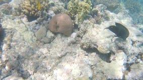 Poissons de la Mer Rouge Bain multicolore de poissons banque de vidéos