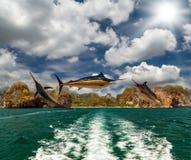Poissons de marlin bleu Image libre de droits