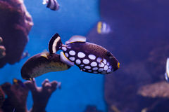 Poissons de mer Image libre de droits