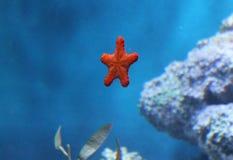 Poissons de mer Photos libres de droits
