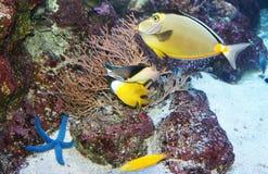 Poissons de mer image stock