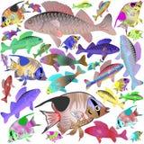 Poissons de mer bariolés Photographie stock libre de droits