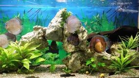 Poissons de mer dans l'aquarium Image libre de droits