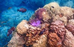 Poissons de mer en Thaïlande Photographie stock libre de droits
