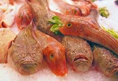 Poissons de mer frais au marché de fruits de mer photos stock