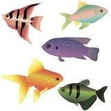 Poissons de mer lumineux Photographie stock libre de droits