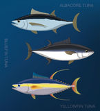 Poissons de mer Tuna Set Cartoon Vector Illustration Photos stock