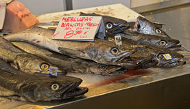 Poissons de merluches à vendre Photo libre de droits
