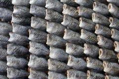 Poissons de muscle pectoral de Trichogaster Images libres de droits