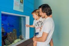 Poissons de observation de père et de fils dans un aquarium Image stock