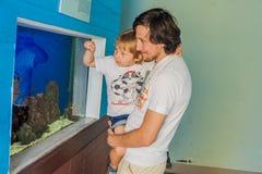 Poissons de observation de père et de fils dans un aquarium Images stock