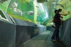 poissons de observation de personnes et amusement de avoir ensemble en voyage de jour photo stock