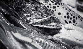 Poissons de pêcheur à la ligne et d'autres fruits de mer, monochromes Photos libres de droits