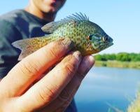 Poissons de poisson Image libre de droits