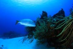 Poissons de récif Photo libre de droits