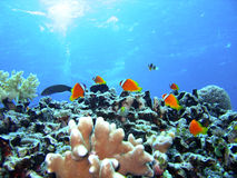 Poissons de récif coralien Images stock