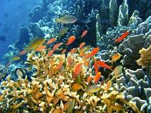 Poissons de récif coralien Photo libre de droits