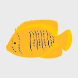 Poissons de récif d'icône Photographie stock libre de droits