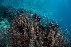 Poissons de récif sur la pente Photos libres de droits
