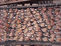 Poissons de séchage Images stock