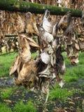 Poissons de séchage, Islande Photographie stock libre de droits