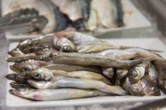 Poissons de Shishamo, poissons d'éperlan Photographie stock