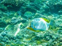 Poissons de sourire heureux en Seychelles Anse sous-marin Latium, Seychelles Images libres de droits