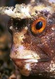 poissons de visage Images libres de droits